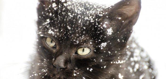 Artykuł: Jak zimą można pomóc bezdomnym zwierzętom z Olsztyna i okolic?