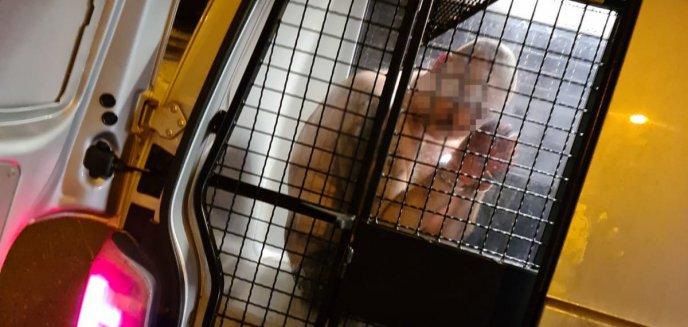 Artykuł: Nocna akcja olsztyńskich wywiadowców w piekarni. Włamywacze-recydywiści wpadli na gorącym uczynku