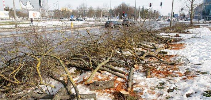 W Olsztynie trwa wycinka drzew pod budowę nowej linii tramwajowej [ZDJĘCIA]