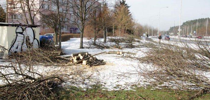 Artykuł: Radny zapytał prezydenta o wycinkę drzew