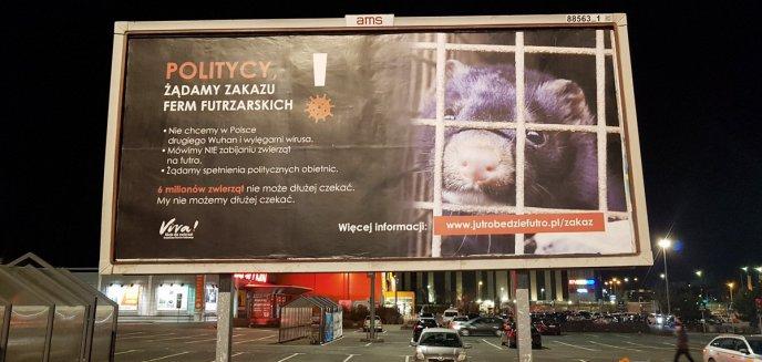 Artykuł: W Olsztynie pojawiły się billbordy z żądaniem zakazu ferm futrzarskich