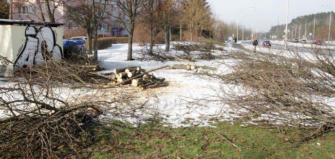 Artykuł: Walka społeczników o zieleń w Olsztynie przynosi efekty. Miasto ogłosiło konsultacje społeczne