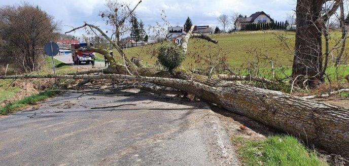 Artykuł: Powalone drzewo całkowicie zablokowało drogę w Bartągu [ZDJĘCIA]