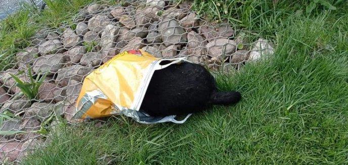 Artykuł: Dzieci znalazły na Jarotach martwego psa w reklamówce. ''Ich przerażenie na twarzach nie do opisania''
