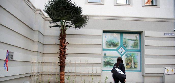 Artykuł: W pobliżu ronda Bema w Olsztynie stanęła... palma [ZDJĘCIA]