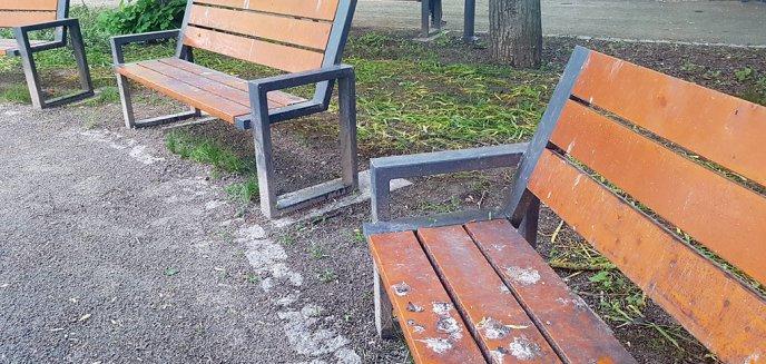 Artykuł: Nie ma gdzie usiąść! Ławki na skwerze przy Manhattanie pokryte ptasimi odchodami [ZDJĘCIA]