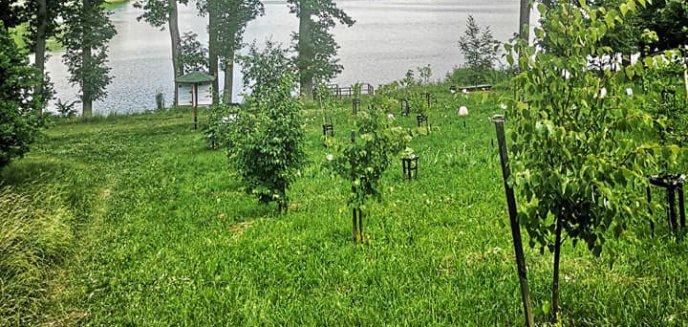 Artykuł: Łęgajny pod Olsztynem. Sadzą drzewa na cześć narodzonych dzieci [ZDJĘCIA]