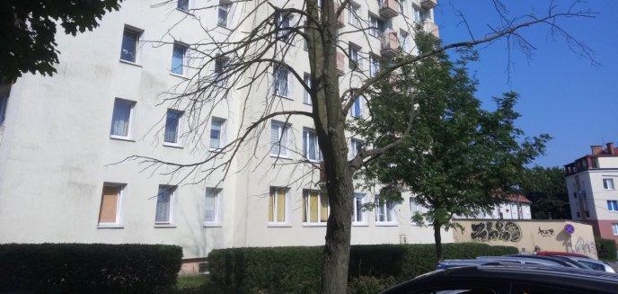 Artykuł: Interweniowaliśmy ws. zagrażającemu bezpieczeństwu drzewa przy ul. Tczewskiej [ZDJĘCIA]