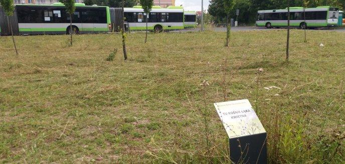 Skosili łąki kwietne w Olsztynie. Czy tak powinno się je pielęgnować?
