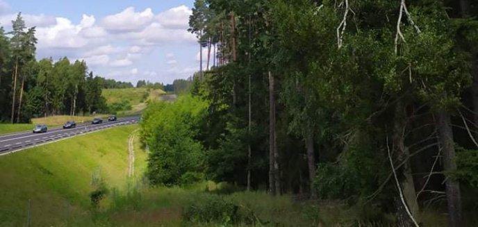 Artykuł: Wycięto drzewa przy DK 16 pod Olsztynem [ZDJĘCIA]
