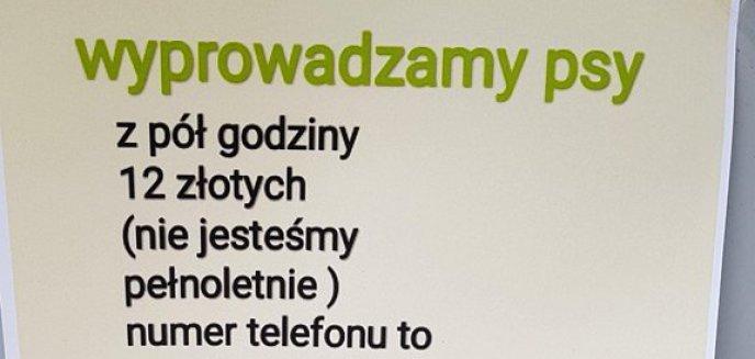 Artykuł: To się chwali! Młodzi ludzie w Olsztynie coraz częściej chcą sami zarabiać, np. wyprowadzając psy