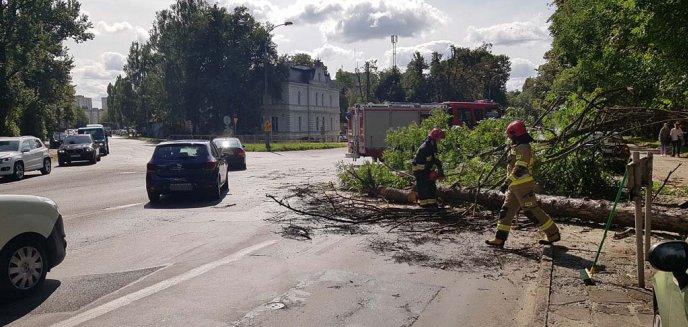Artykuł: Na al. Wojska Polskiego drzewo spadło na jezdnię [ZDJĘCIA]