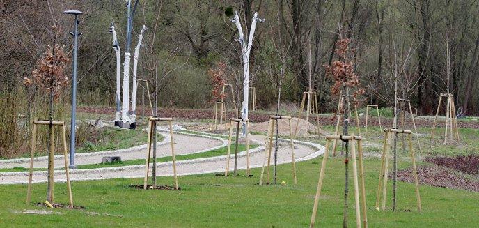 Artykuł: Mieszkańcy Jarot i Nagórek zadecydują, czy tereny zielone między osiedlami staną się pełnoprawnym parkiem [ZDJĘCIA]