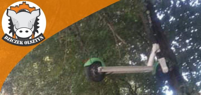 Artykuł: Ktoś ''zaparkował'' hulajnogę na... drzewie w Olsztynie