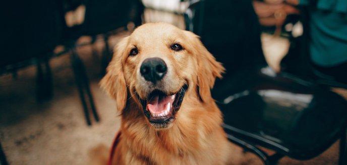 Jak i czym karmić psa – czyli o modach i metodach