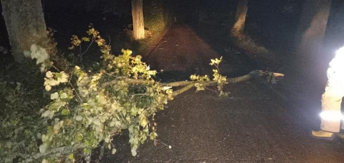 Artykuł: Wichury nad regionem. Bez prądu pozostaje pół tysiąca osób