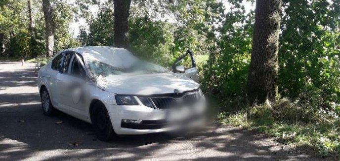 Artykuł: Tragedia pod Bisztynkiem. Na jadący samochód spadło drzewo, nie żyje 59-letni kierowca [ZDJĘCIA]