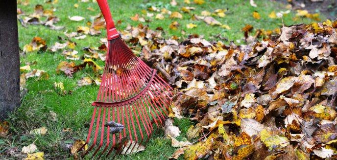 Artykuł: Olsztynianka uważa, że liście grabione są zbyt często. Co na to ZDZiT i spółdzielnie?
