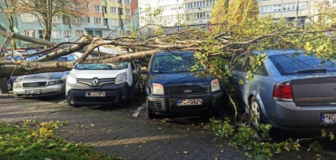 Artykuł: Silny wiatr nad regionem. W samym Olsztynie strażacy interweniowali 150 razy! [ZDJĘCIA]