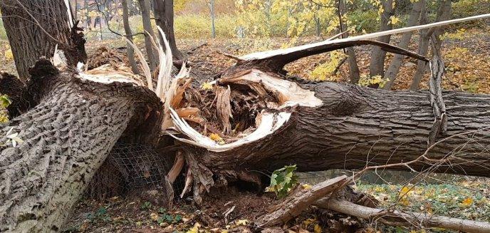 Artykuł: Spore straty przyrodnicze po nawałnicy, która przeszła nad Olsztynem [WIDEO]