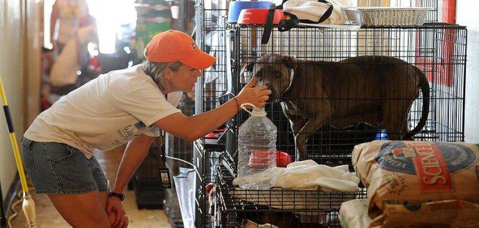 Artykuł: Luty miesiącem wsparcia schroniska dla zwierząt!