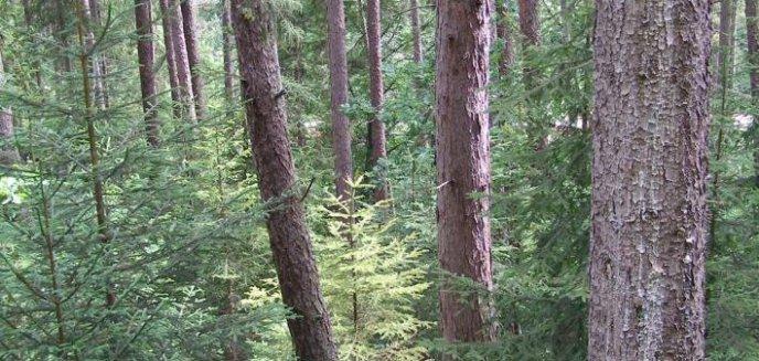 Artykuł: Ciało zaginionego znaleziono w lesie