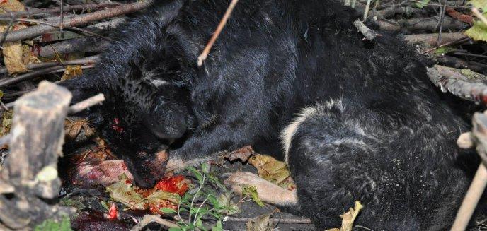 Artykuł: Zabił swojego psa, bo rzekomo ugryzł go w rękę